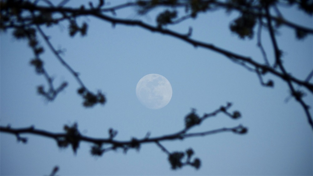 Late Day Moon.jpg