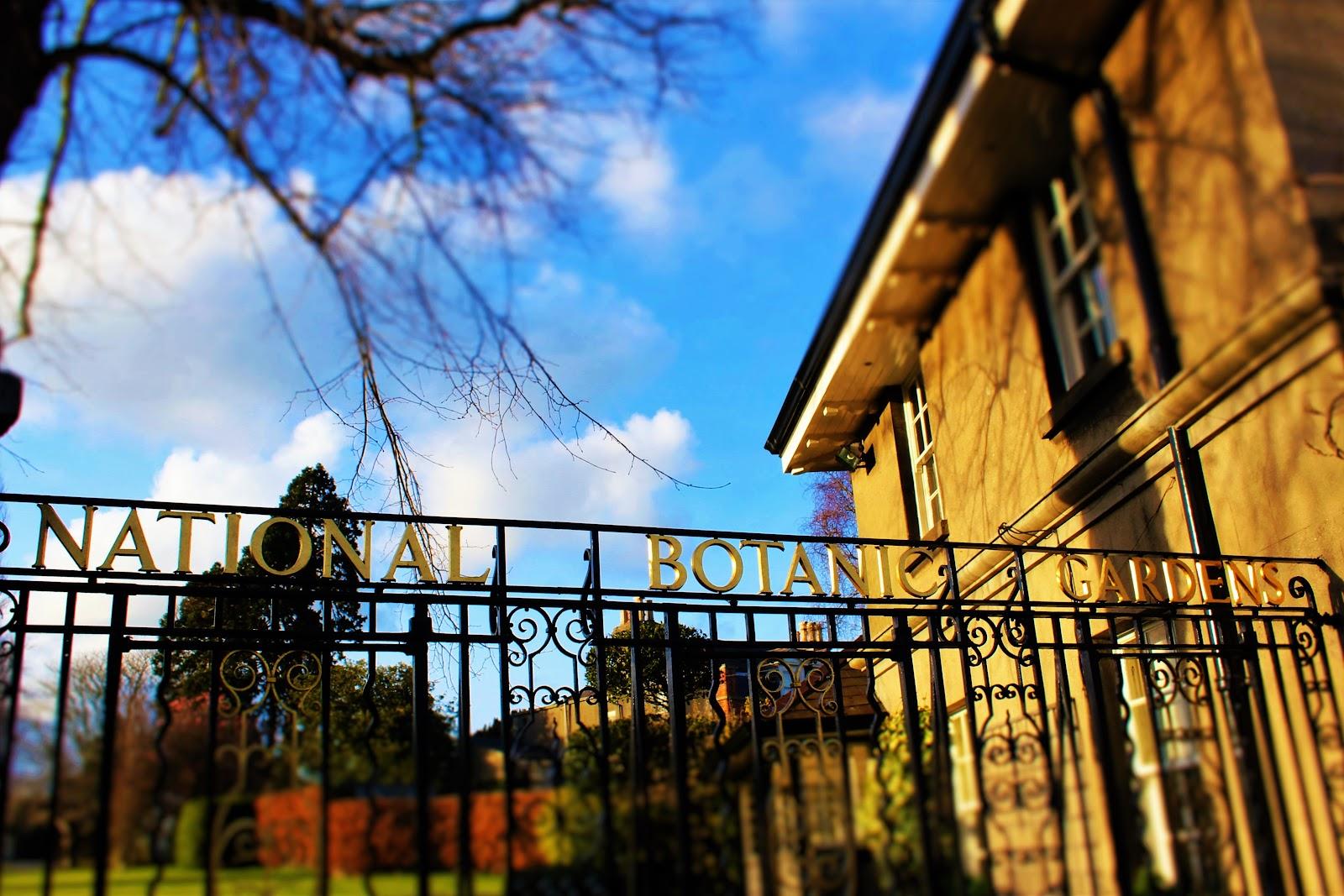 Dublin Botanic Gdns.JPG