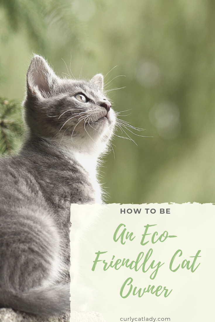 How to be an eco-friendly cat owner