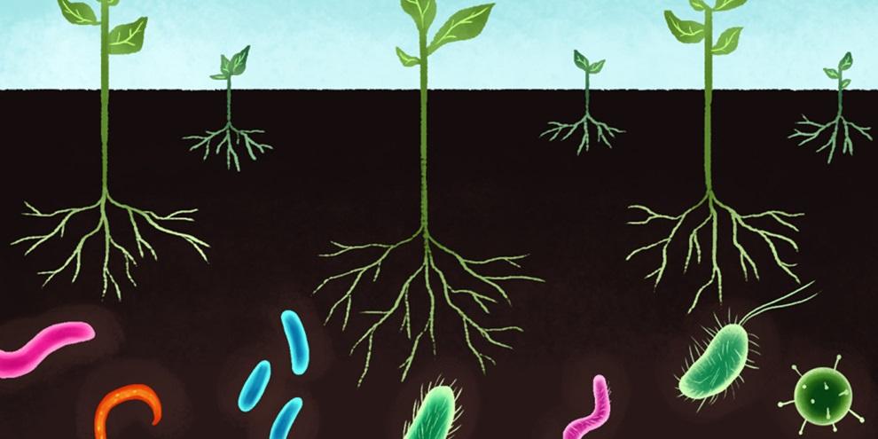 Microrganismos na agricultura (Fonte: Thiago Orgânico/Reprodução)