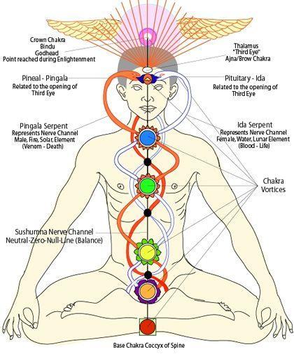 amaya yoga-human body and kundalini - Blog of Jinesh Narayanan