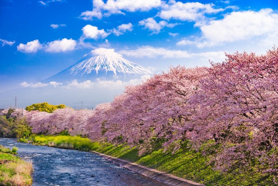日本全年賞花 - 櫻花