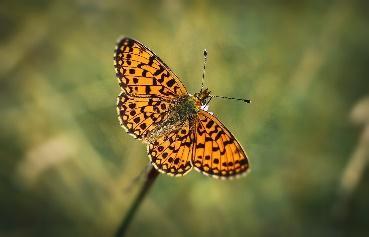Papillon Insectes Scarabée - Photo gratuite sur Pixabay