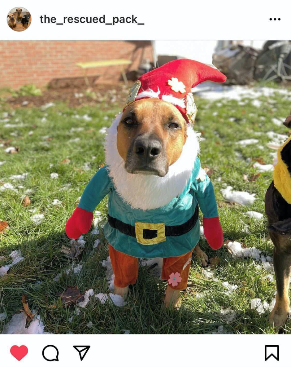 Lawn Statue Halloween Costume Ideas For Dogs