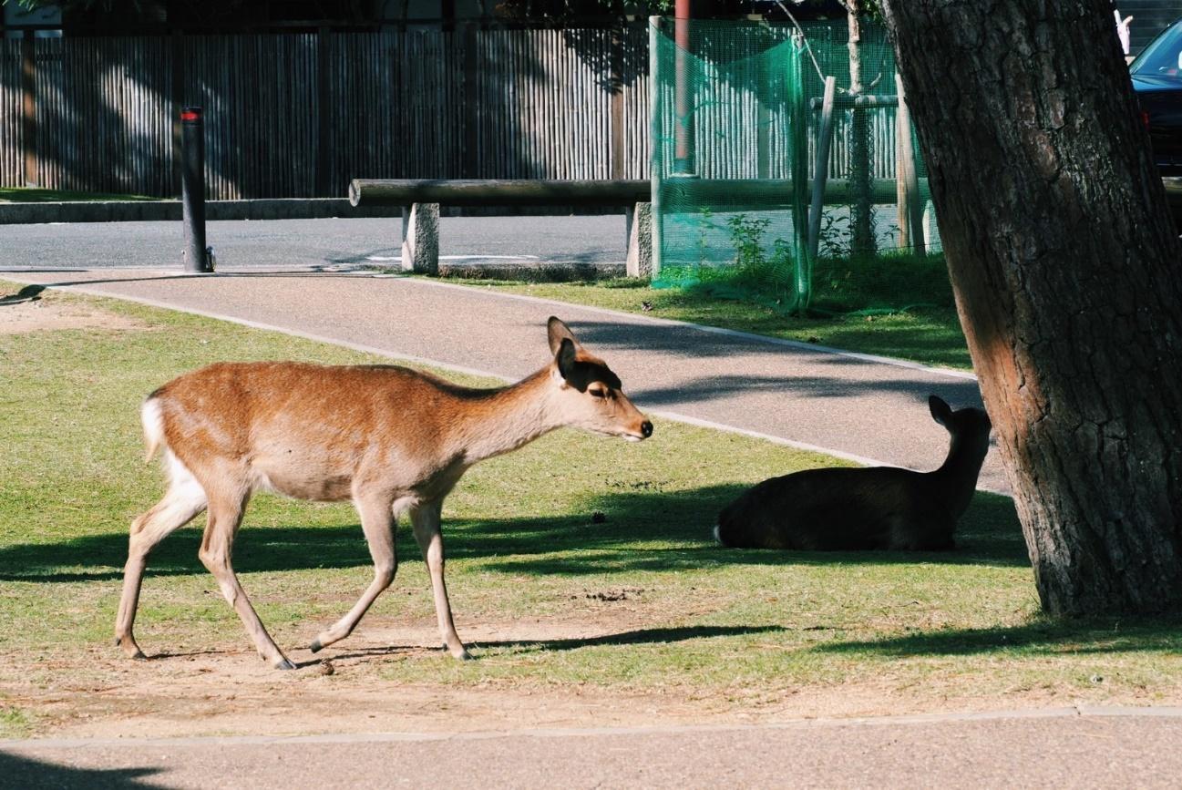 草の上にいる動物  自動的に生成された説明