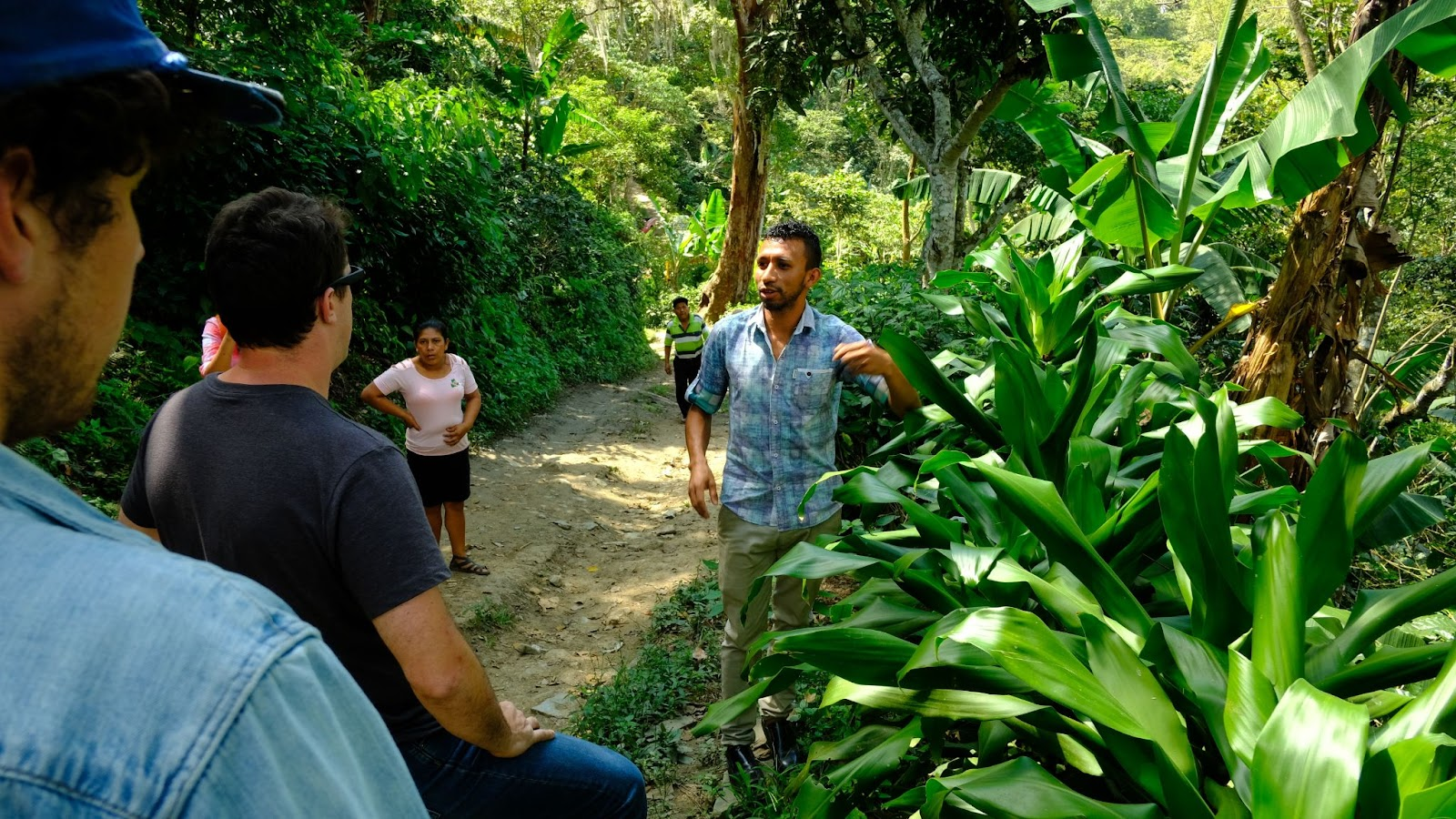 """Showcasing """"Buffer Plants"""" and how they protect from the ground up.These often separate coffee plants from roads and protect against any vehicle exhaust."""