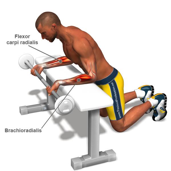 forearm-exercises-l.jpg