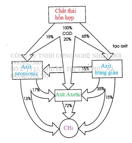 Quá trình chuyển hóa trong bể UASB