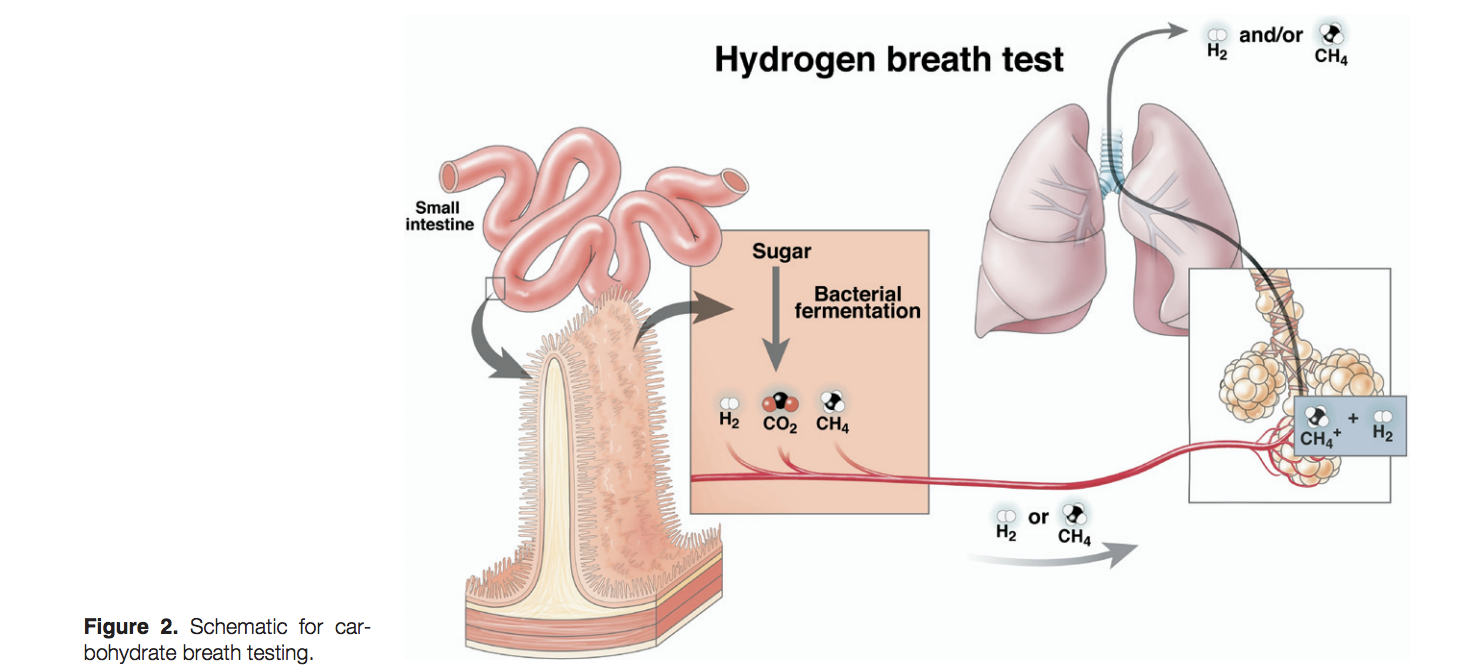 Image taken from: Breath Tests for Gastrointestinal Disease: The Real Deal or Just a Lot of Hot Air?