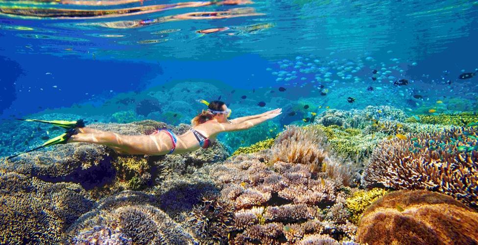 月亮灣獨有的海水和海洋生物成為了推薦沙巴潛水的地點之一