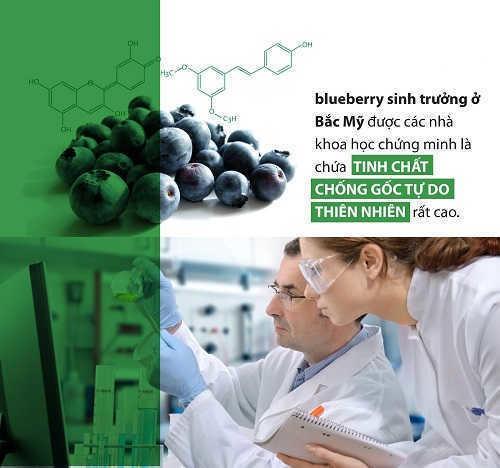 tinh chất thiên nhiên từ Blueberry có trong OTiV