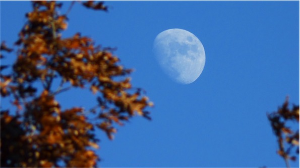 Tight Crop Moon 1.jpg
