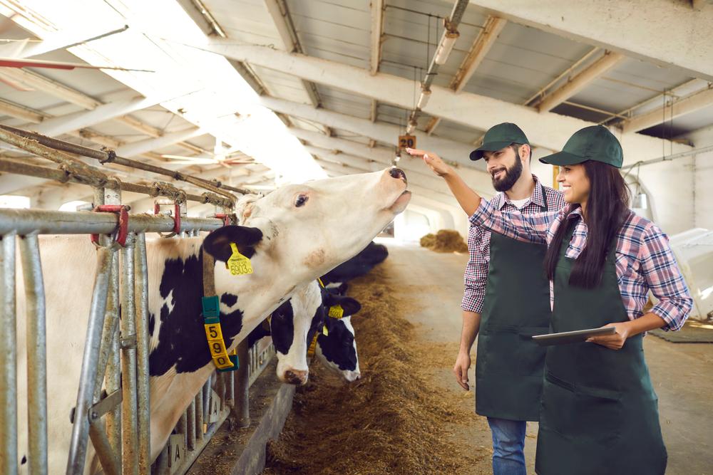Rastreamento de produtos agropecuários diminui riscos para o agronegócio. (Fonte: Shutterstock/Studio Romantic/Reprodução)