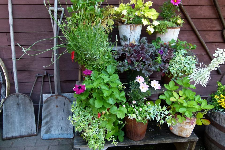 gardening plants with shovel outside of barn