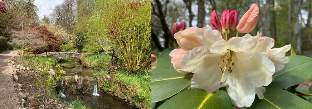 Enjoy the beautiful gardens of Lukeland Gardens while on holiday in Devon.