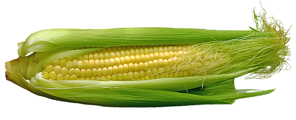 corn silk is smooth and straight.