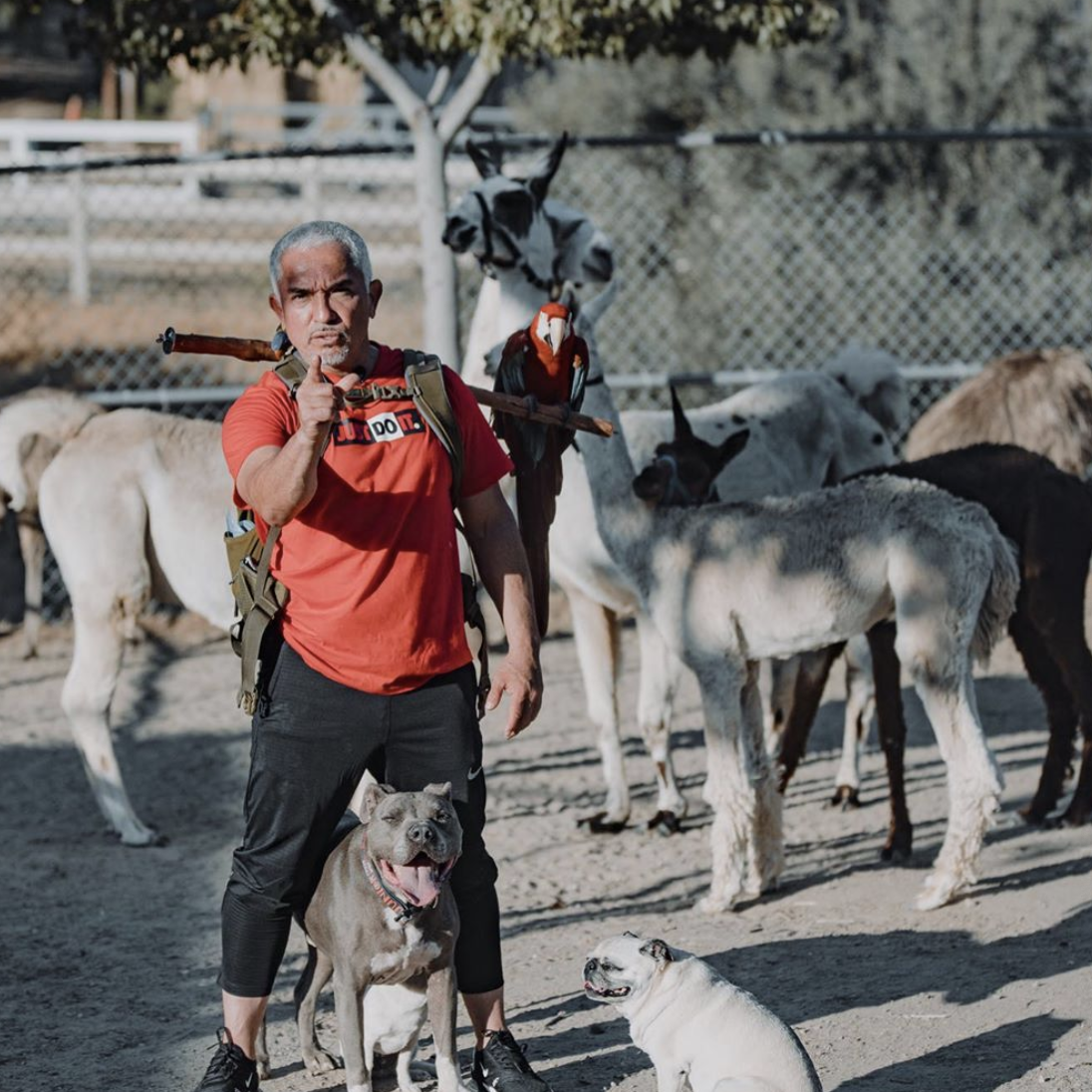 Dog Whisperer Cesar Millan | Emmy-nominated Reality Star