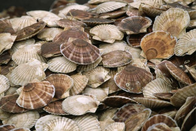 ホタテ貝殻は飼料の他にどんな再利用されている?