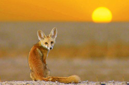 Rann of Kutch best time wildlife desert