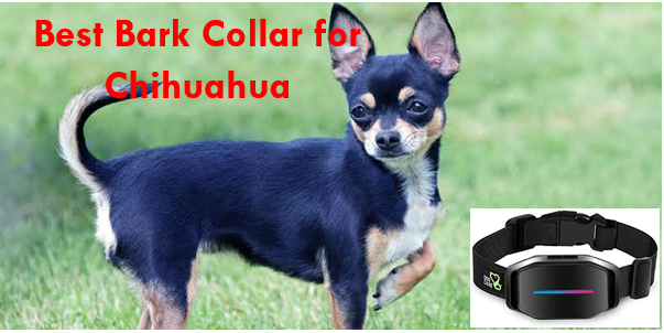 best bark collar for Chihuahua in 2020 - The Farm Store Reviews