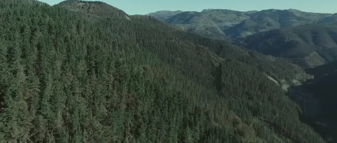 bosques.jpg