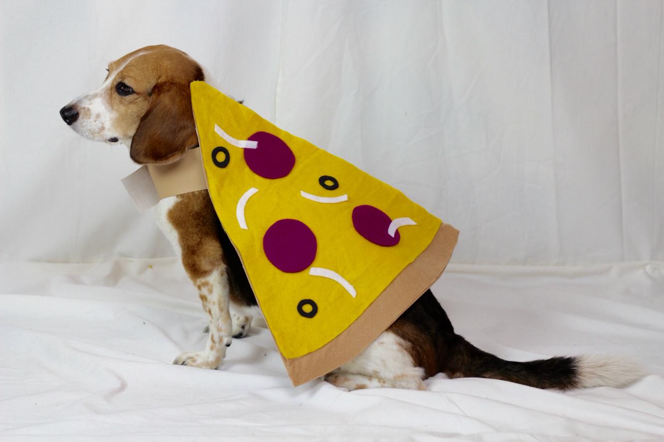 Dog wearing pizza costume
