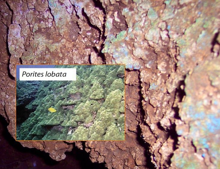 http://2.bp.blogspot.com/-bk2LsUtx1ng/VLGhzCSKkVI/AAAAAAAAEJQ/WIGqWTZqxKo/s1600/Railway-Coral-Cave.jpg