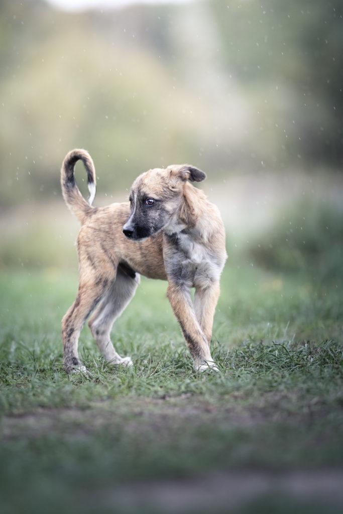 belle photo de chien