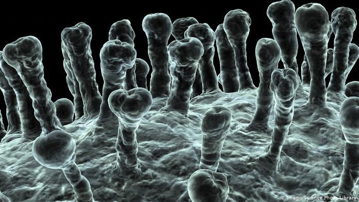 Коронавіруси використовують рецептори ACE2, аби потрапити до організму