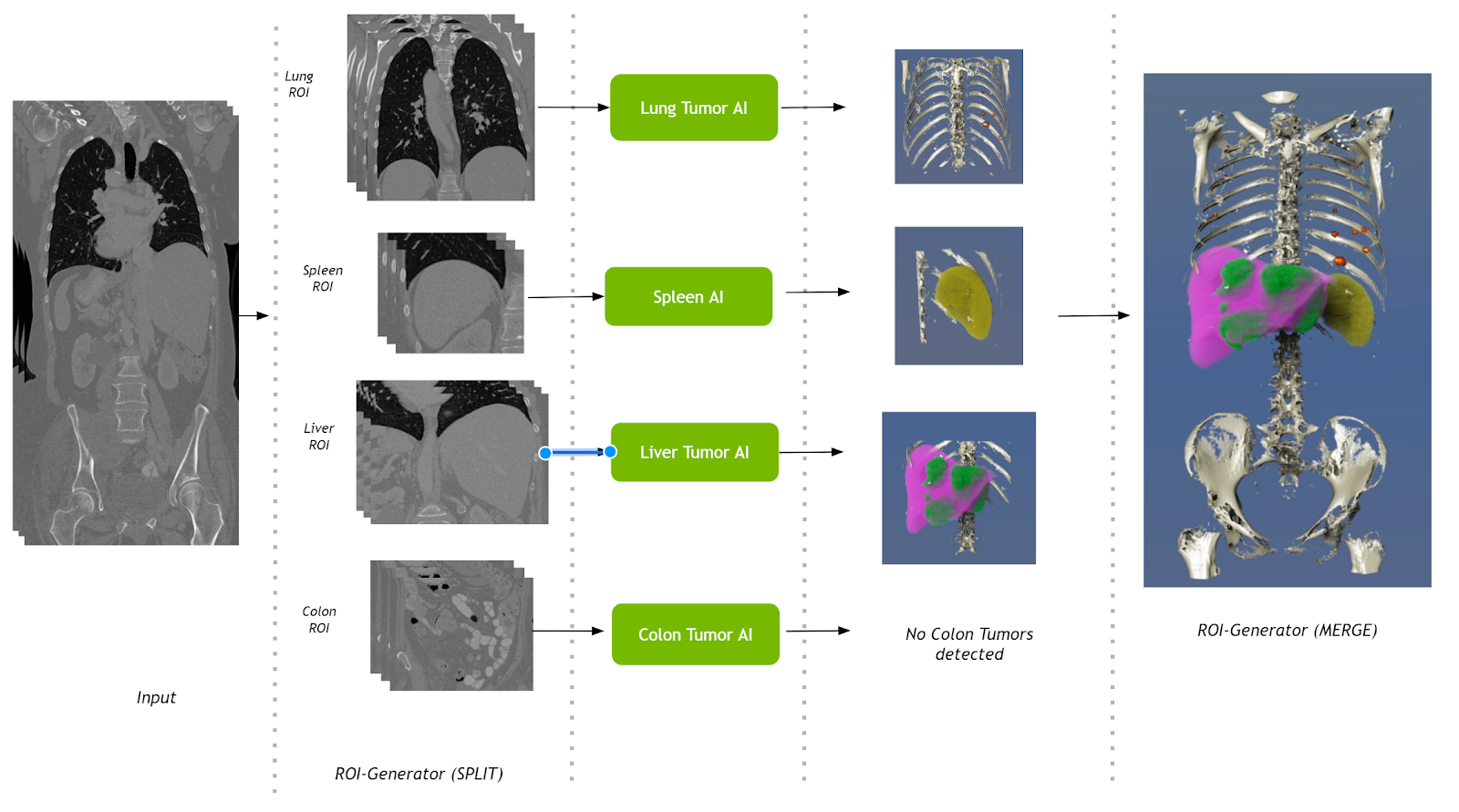 The Multi-organ AI pipeline takes a CT study, runs several organ segmentation algorithms including lung, spleen, liver, and colon, and combines the outputs into a single presentation using Clara Render Server.