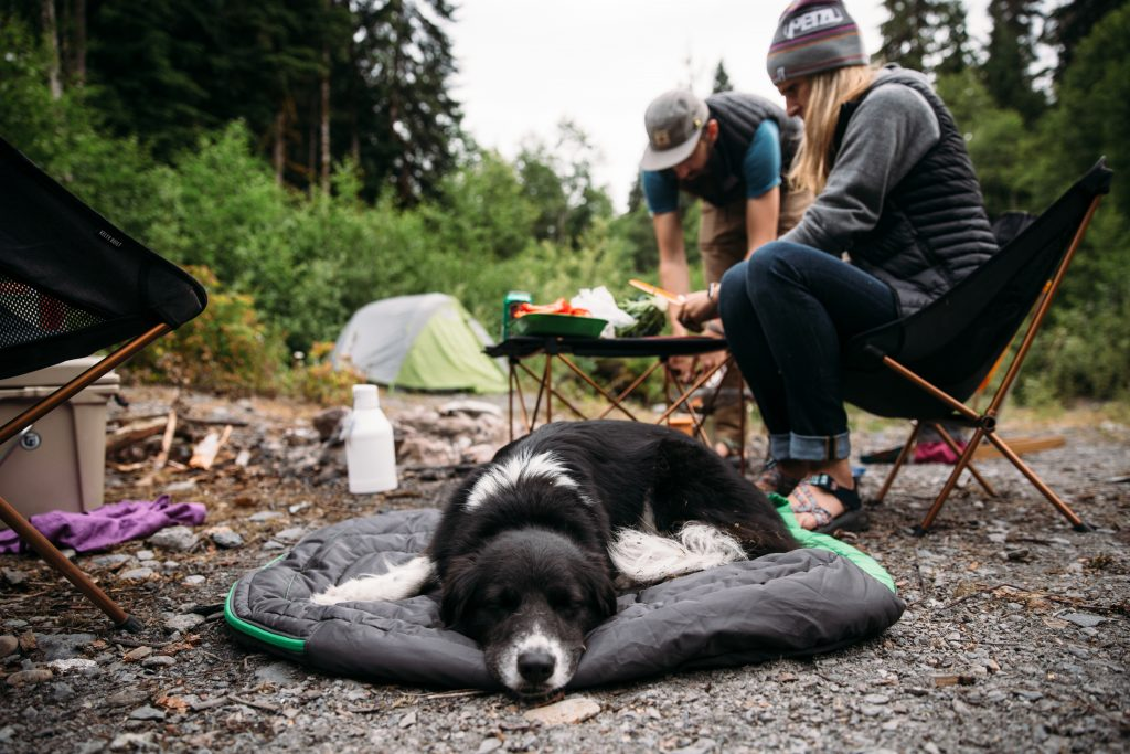 Image result for dog camping
