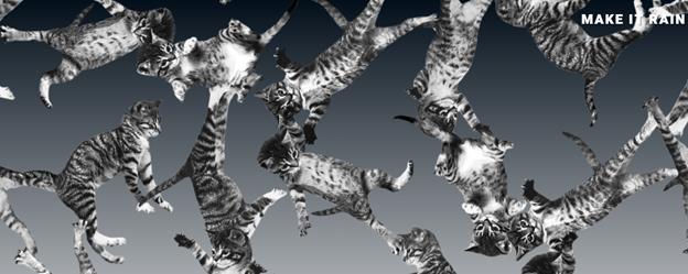 cat bounce