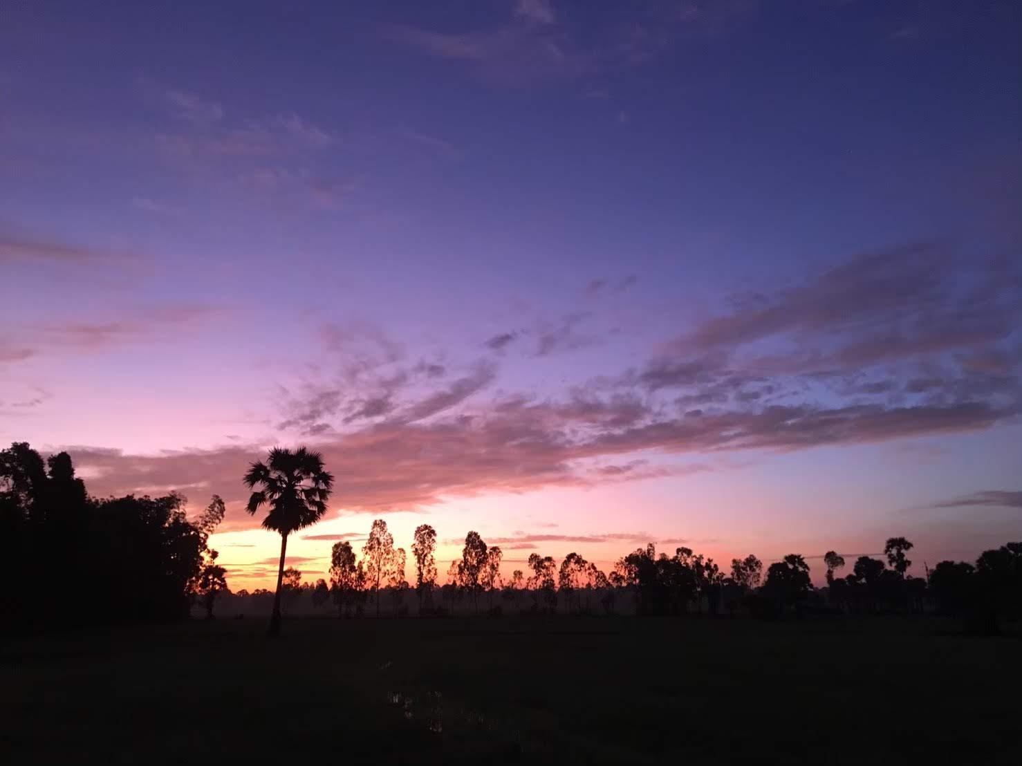 屋外, 夕日, 草, フィールド が含まれている画像  自動的に生成された説明