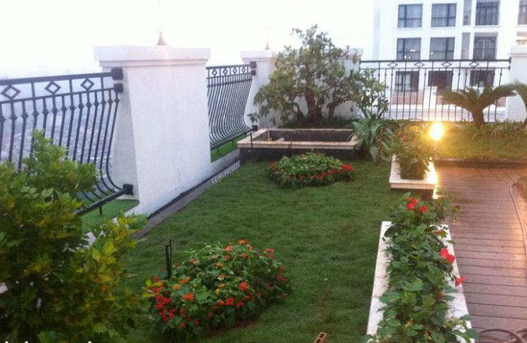 Nên chọn đơn vị trồng cỏ ở Long An nào uy tín