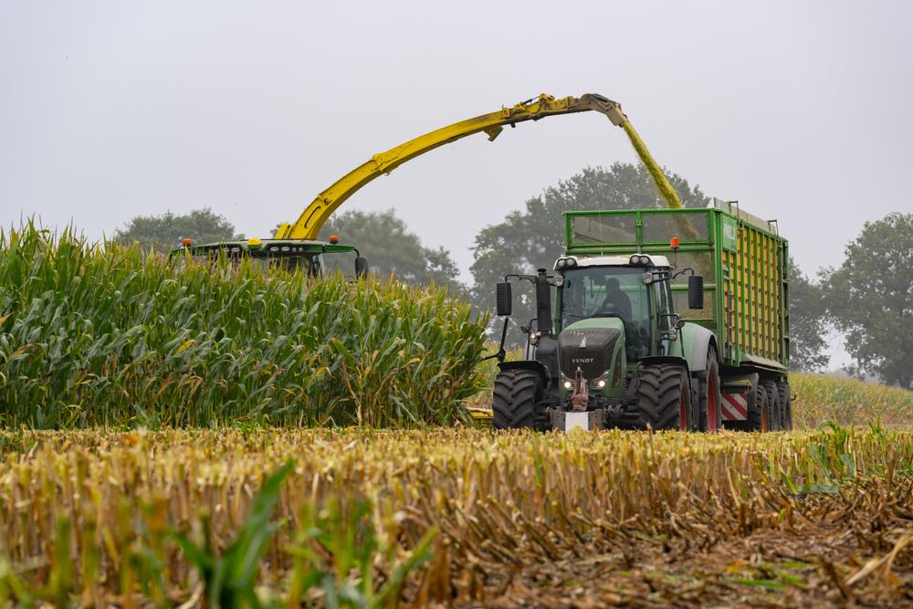 Início da colheita do milho safrinha em importantes estados produtores ajudou a derrubar a cotação do produto. (Fonte: Shutterstock/Claudia Harms-Warlies/Reprodução)