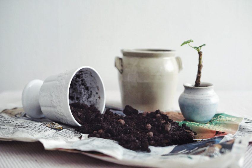 Plantbyrån att välja rätt jord till krukväxterna
