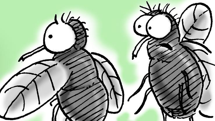 Two scared flies