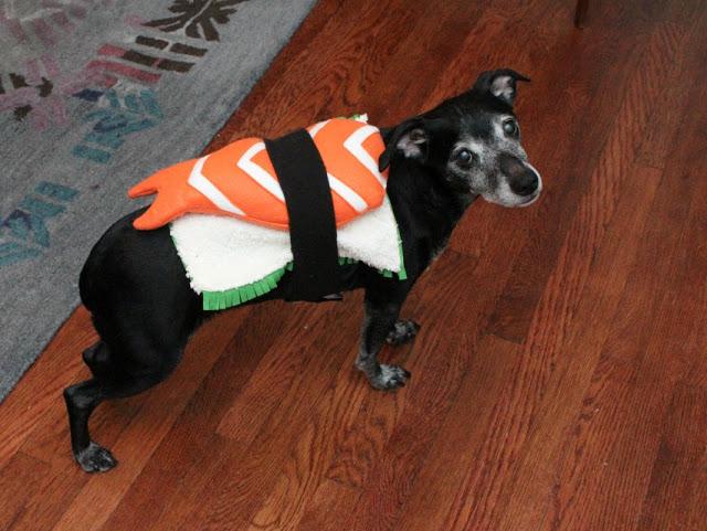 Dog wearing sushi costume