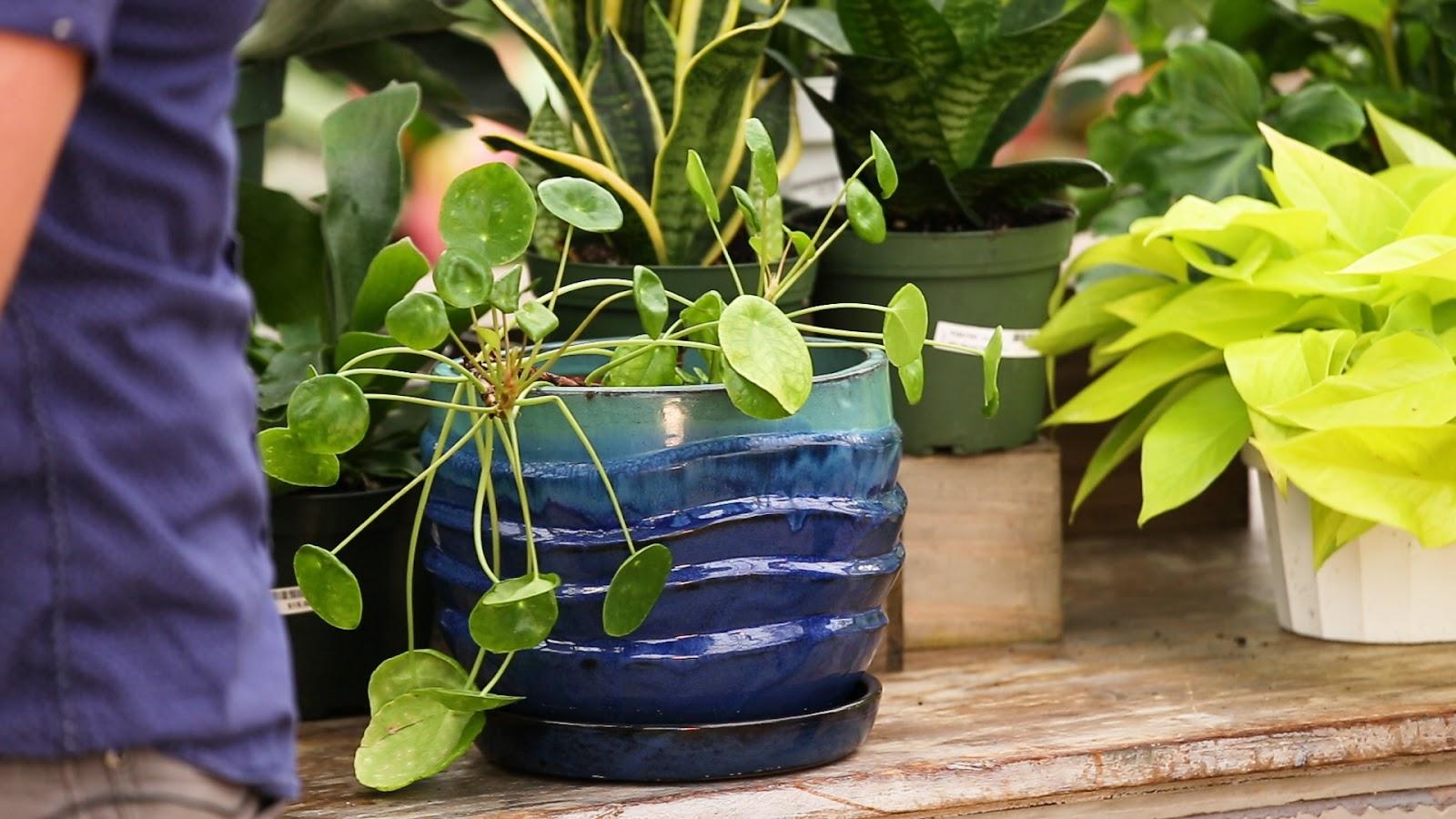 Indoor Plant Care - Modern Gardener | KUED org