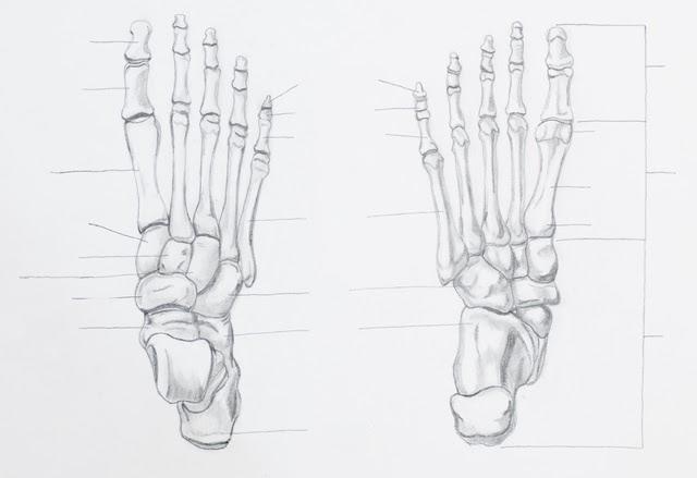 足の3点アーチが崩れると、上半身と身体全体が崩れる
