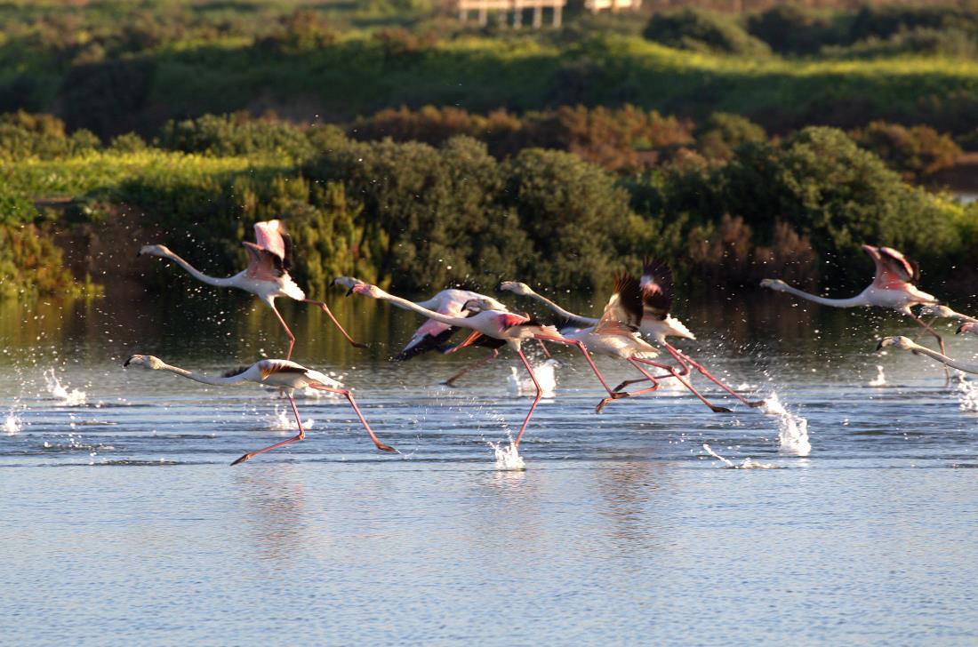 flamingo 1_rsz.jpg