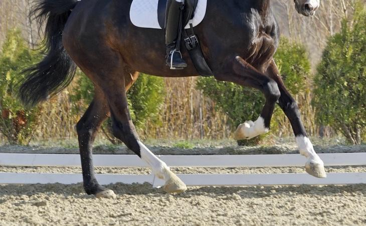 How to Build Relaxed Power in the Dressage Horse ⋆ How To Dressage