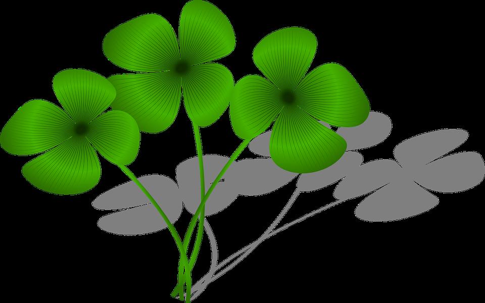Clovers, Luck, Flora, Green, ...