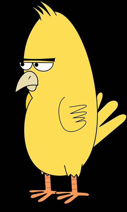 Bird, Angry, Animal, Angry Bird, Mad