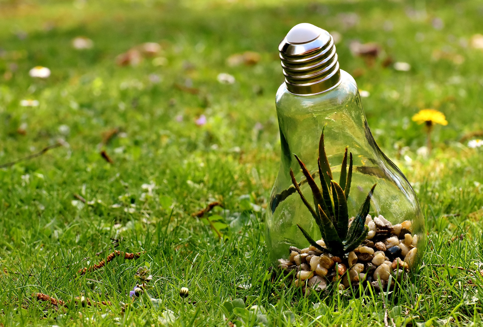 lightbulb with plant inside sits on the grass