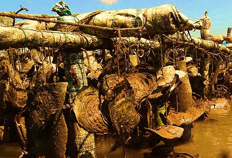 hàu chết, ngập mặn, bến tre, nông dân
