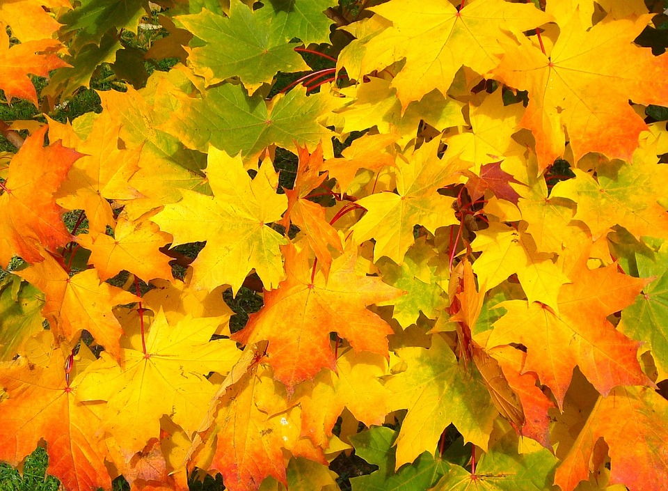 Free photo Orange Season Autumn Yellow Leaves Colorful Fall - Max ...