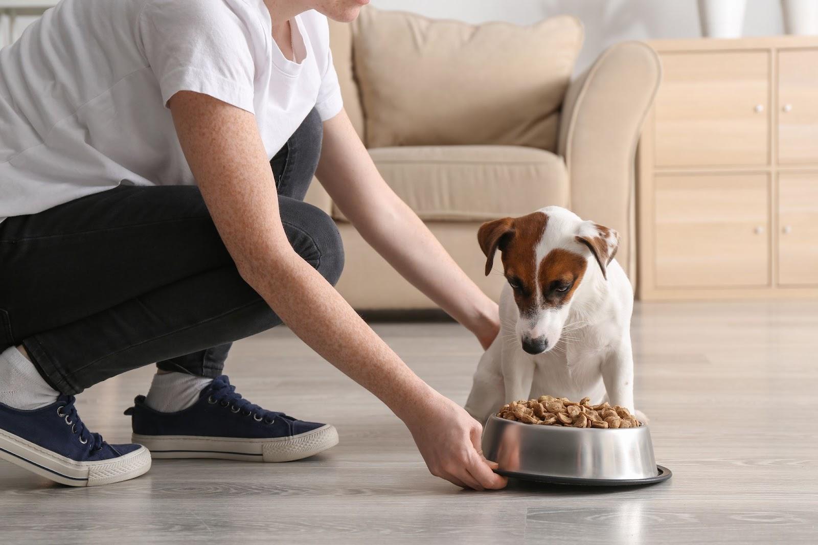 5 Ways Diet Can Affect A Dog's Behaviour