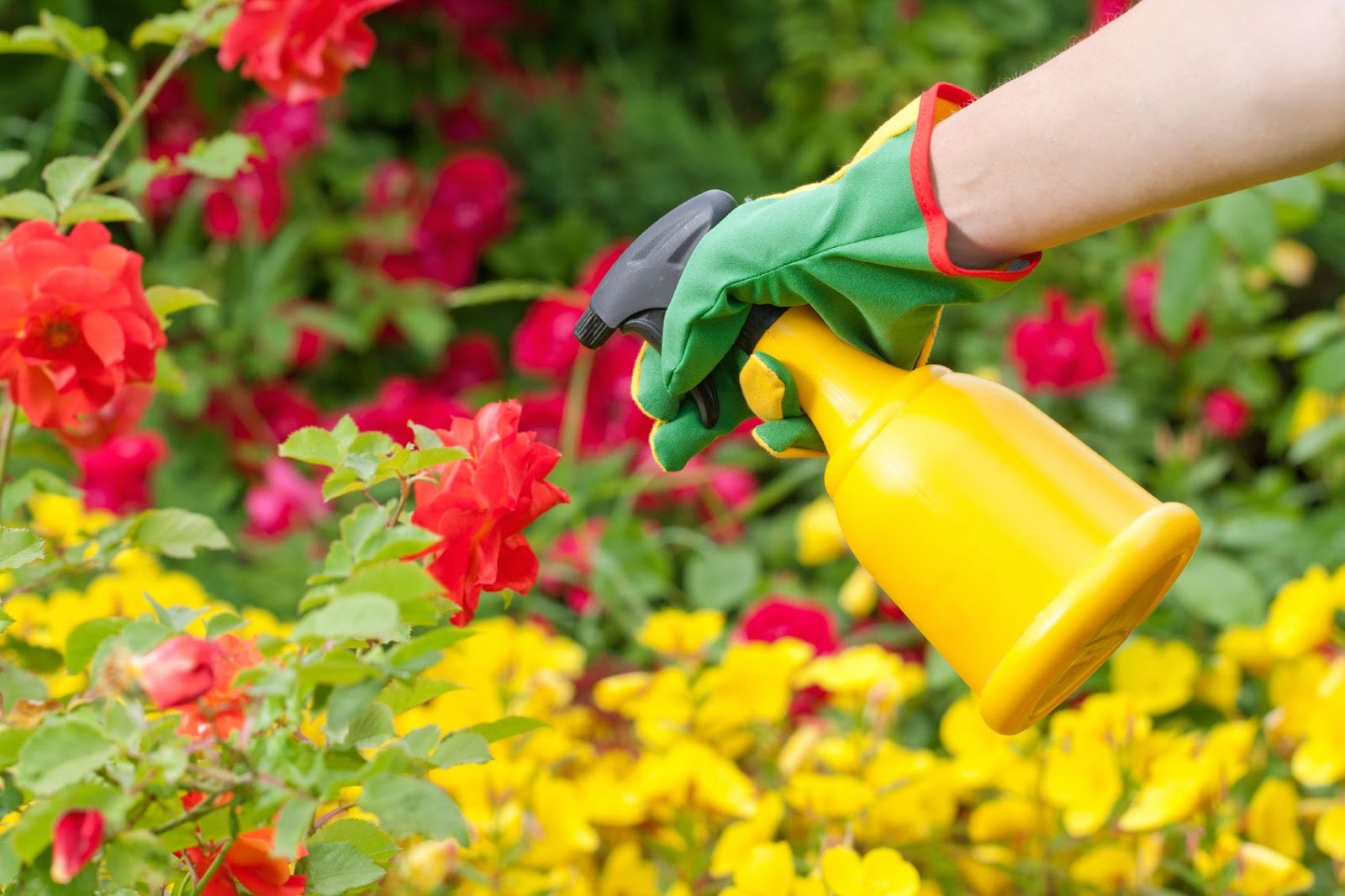 Dangers of Using Chemical Gardening PRoducts