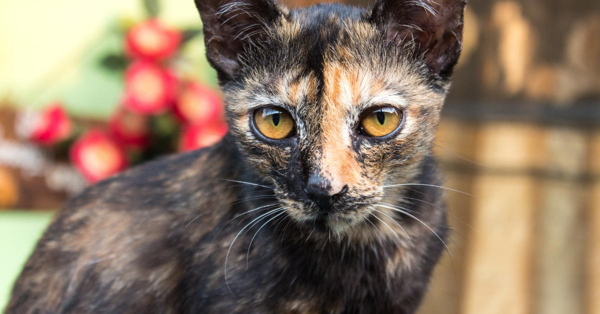 A tortoiseshell cat.  Note the orange and dark patterns on the face and body that are from either X chromosome.